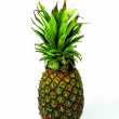 Pineapple (Latin Ananas) - genus of herbaceous plants of tropical bromeliads (Bromeliaceae). — Stock Photo