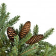 Spruce branches with cones — Stock Photo #17824319