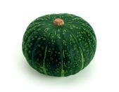 Pumpkin (Latin Cucurbita) - genus of herbaceous plants of the family Pumpkin (Cucurbitaceae). — Stock Photo