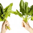 Hands holding a leaves chards — Stock Photo