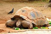 Wielki żółw. — Zdjęcie stockowe