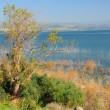 Stock fotografie: KInneret lake.