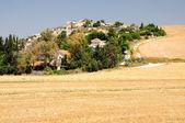 Israeli landscape. — Stock Photo