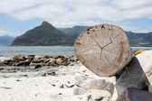 Tree trunk at the beach — Stock Photo