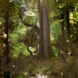 Magic Forest - Stockfoto