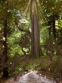 Foresta magica — Foto Stock