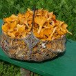 Chanterelles full big basket from european forests — Stock Photo #17609217
