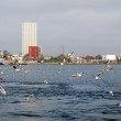 Weather on a Klaipeda port - autumn waves, wind and flying seagulls — Stock Photo