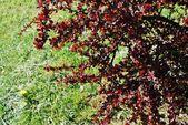 Printemps saison abstraite nature fond avec de l'herbe — Photo