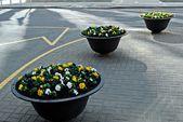 Blomvaser i vilnius staden gatan — Stockfoto