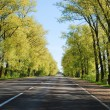 Summer day and road with trees at side — Stock Photo #45932425