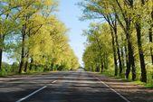 Zomerdag en over de weg met bomen aan zijkant — Stockfoto