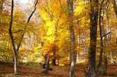 Bosque de colores otoñales. crimea — Foto de Stock