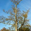 Stock Photo: Tree stripped in autumn