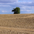 Tree isolated in the middle in field (Burgundy France) — Stock Photo