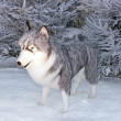Wolf in snow (enormous cuddly toy for animation) — Stock fotografie #16291563