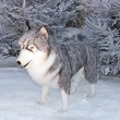 Foto Stock: Wolf in snow (enormous cuddly toy for animation)