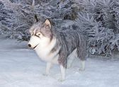 Wolf in the snow (enormous cuddly toy for animation) — Stock Photo
