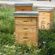 Hives in town, in middle of clam — Stock Photo #17857313