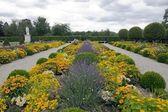 Formal garden, lavender in perspective (France) — Foto de Stock
