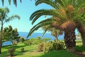 Palm trees, the seaside Funchal, island of Madeira — Stock Photo