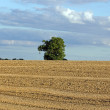 Solitary tree in middle of field (Burgundy France) — Stock Photo #24729665