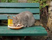 Abandoned cat fed on a bench, Paris France — Stock Photo