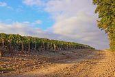 Rocky way near vineyards (Burgundy France) — Stock Photo