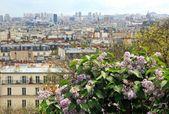 Bush of lilac in the rain, Paris on the horizon (France) — Stock Photo
