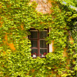 Window framed by the vine, Orlik Castle, Czech Republic — Stock Photo