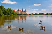 Moritzburg Castle pond — Stock Photo