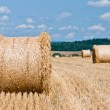 Hay roll — Stock Photo #38206285