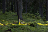 Forest with sunlight — Stock Photo