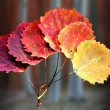 Six autumn aspen leaves — Stock Photo