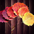 Six autumn aspen leaves — Stock Photo #12761553