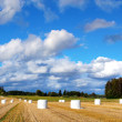 Rural panorama — Stock Photo