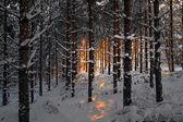 Floresta no inverno, ao pôr do sol — Foto Stock