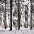 Forest on windy winter day — Stock Photo