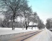 在冬季大道 — 图库照片
