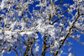 Branch with rime frost — Stock Photo