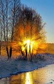 Tree filtering sunbeams — Stock Photo