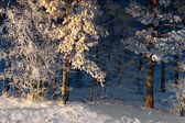 Trees with rime frost — Stock Photo