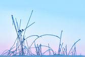 Bevroren gras op roze hemel — Stockfoto