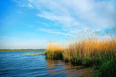 Lake with reeds — Stock Photo