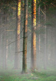 Trees in foggy cold morning — Stock Photo