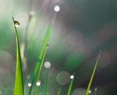 Gocce di pioggia su erba — Foto Stock