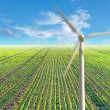 Fild with plants and wind power mill - Stock Photo