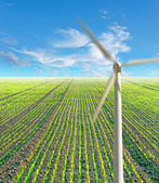 Fild with plants and wind power mill — Stock Photo