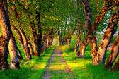 Walking path — Stock Photo
