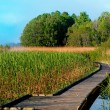 boardwalk path in swamp — Stock Photo